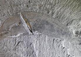 A mineral blueprint for finding Burgess Shale-type fossils