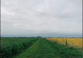 An image from the farm site in Illinois used in the carbon capture study. photo Gavrielle Welbel.